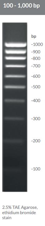 100 - 1,000 bp DNA Ladders