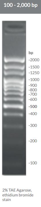 100 - 2,000 bp DNA Ladders