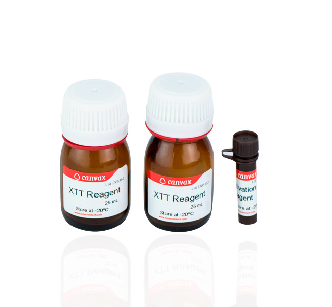 XTT Cell Proliferation Assay Kit