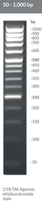 50 - 1,000 bp DNA Ladder