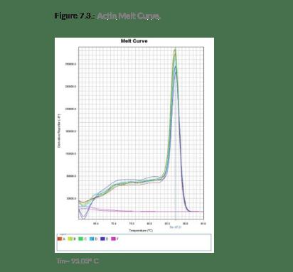 Actin Melt Curve