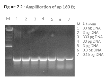 Amplification of up 160 fg