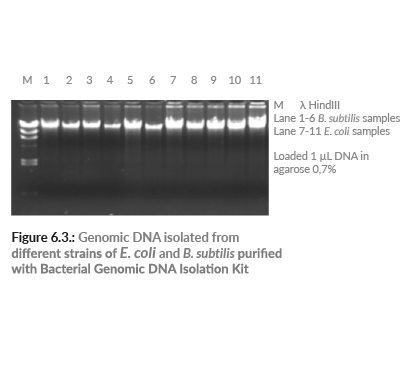 Bacterial Genomic DNA Isolation