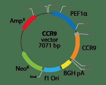 Chemokine (C-C motif) Receptor 9