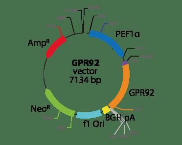 Lysophosphatidic Acid Receptor 5