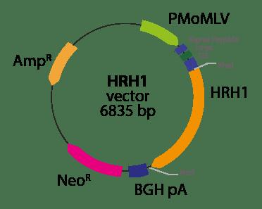 Histamine Receptor H1