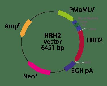 Histamine Receptor H2