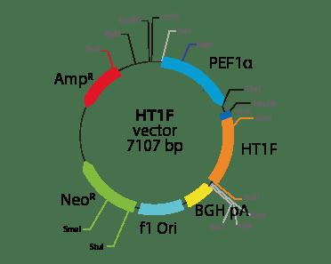 5-hydroxytryptamine (serotonin) Receptor 1F
