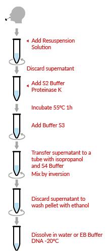 HigherPurity™ Buccal Saliva Genomic DNA Extraction Kit Protocol