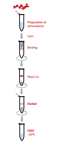 HigherPurity™ Yeast Genomic DNA Isolation Kit Protocol