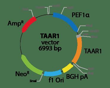 Trace Amine Associated Receptor 1