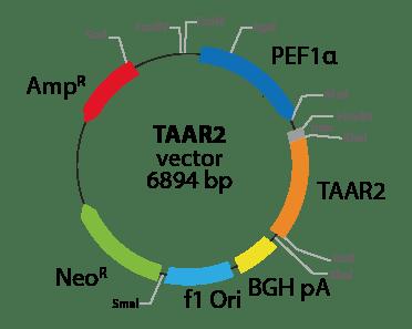 Trace Amine Associated Receptor 2