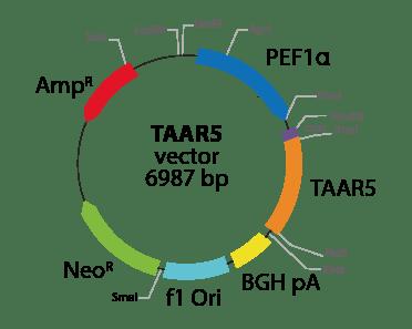 Trace Amine Associated Receptor 5