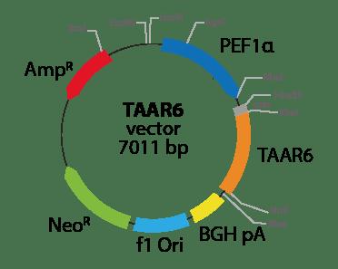 Trace Amine Associated Receptor 6