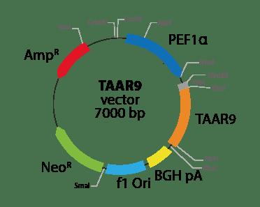 Trace Amine Associated Receptor 9