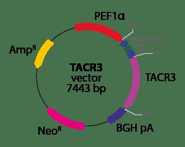 Tachykinin Receptor 3