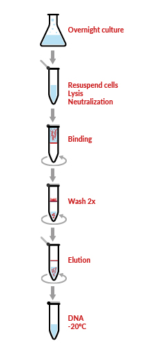 WideUse™ Plasmid Purification Kit Protocol
