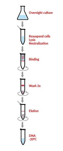 WideUse™ Plasmid Purification Kit Protocol