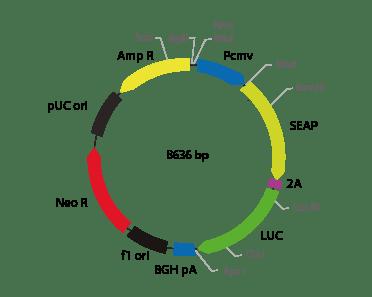 p2V-SEAP - LUC-I