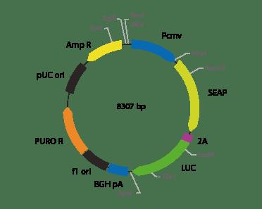 p2V-SEAP - LUC-II