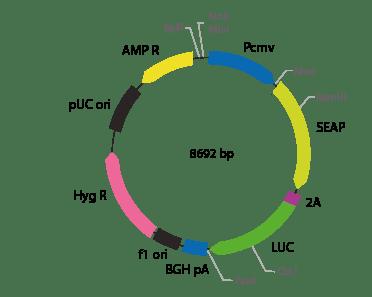p2V-SEAP - LUC-III