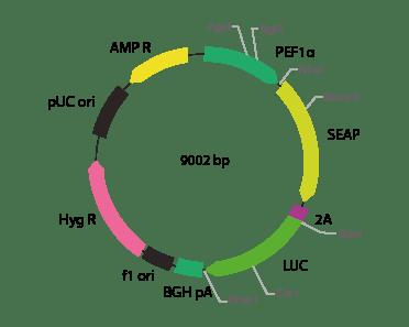 p2V-SEAP - LUC-IIIa