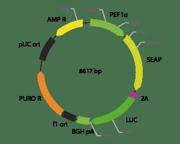 p2V-SEAP - LUC-IIa