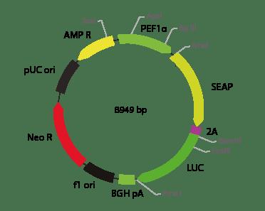 p2V-SEAP -  LUC-Ia