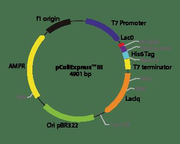 pColiExpress III