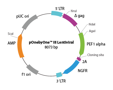 pOnebyOne III Lentiviral