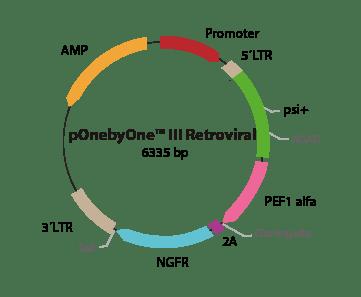 pOnebyOne III Retroviral