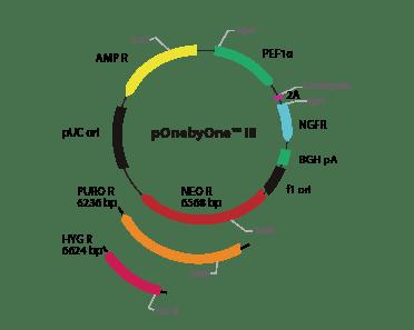 pOnebyOne III