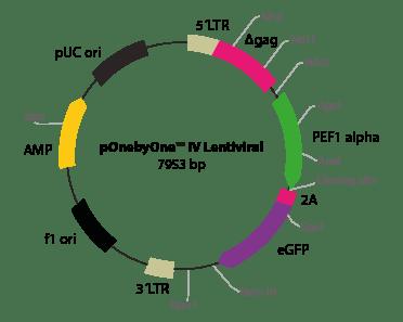 pOnebyOne IV Lentiviral