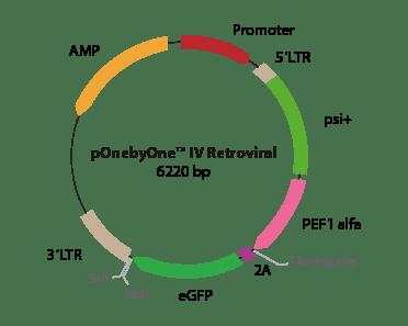 pOnebyOne IV Retroviral