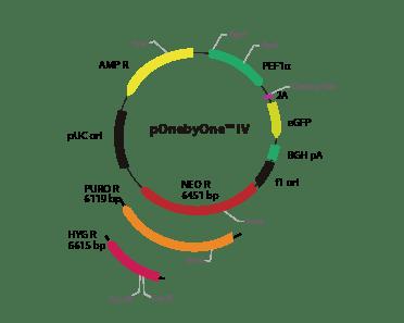 pOnebyOne IV