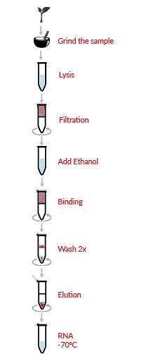 HigherPurity™ Plant RNA Purification Kit Protocol