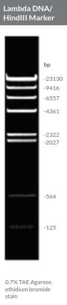 How Long Is Dna Stable At Room Temperature