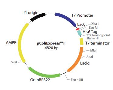 pColiExpress I