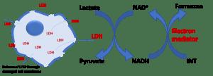 LDH cytotocity